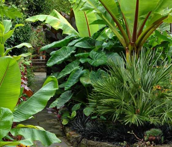 Formal tropical garden ideas photograph cottage garden for for Low maintenance tropical garden